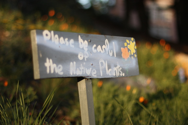 please-mind-the-plants