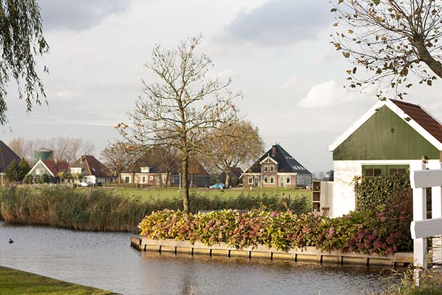 Broek In Waterland sheep