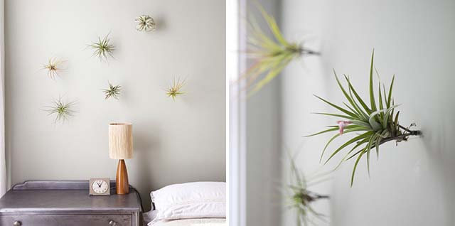 7 Ways to Display Air Plants | Like Fresh Laundry